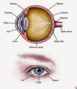eye_diagram_300x350
