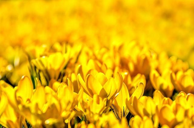 flower-316696_640